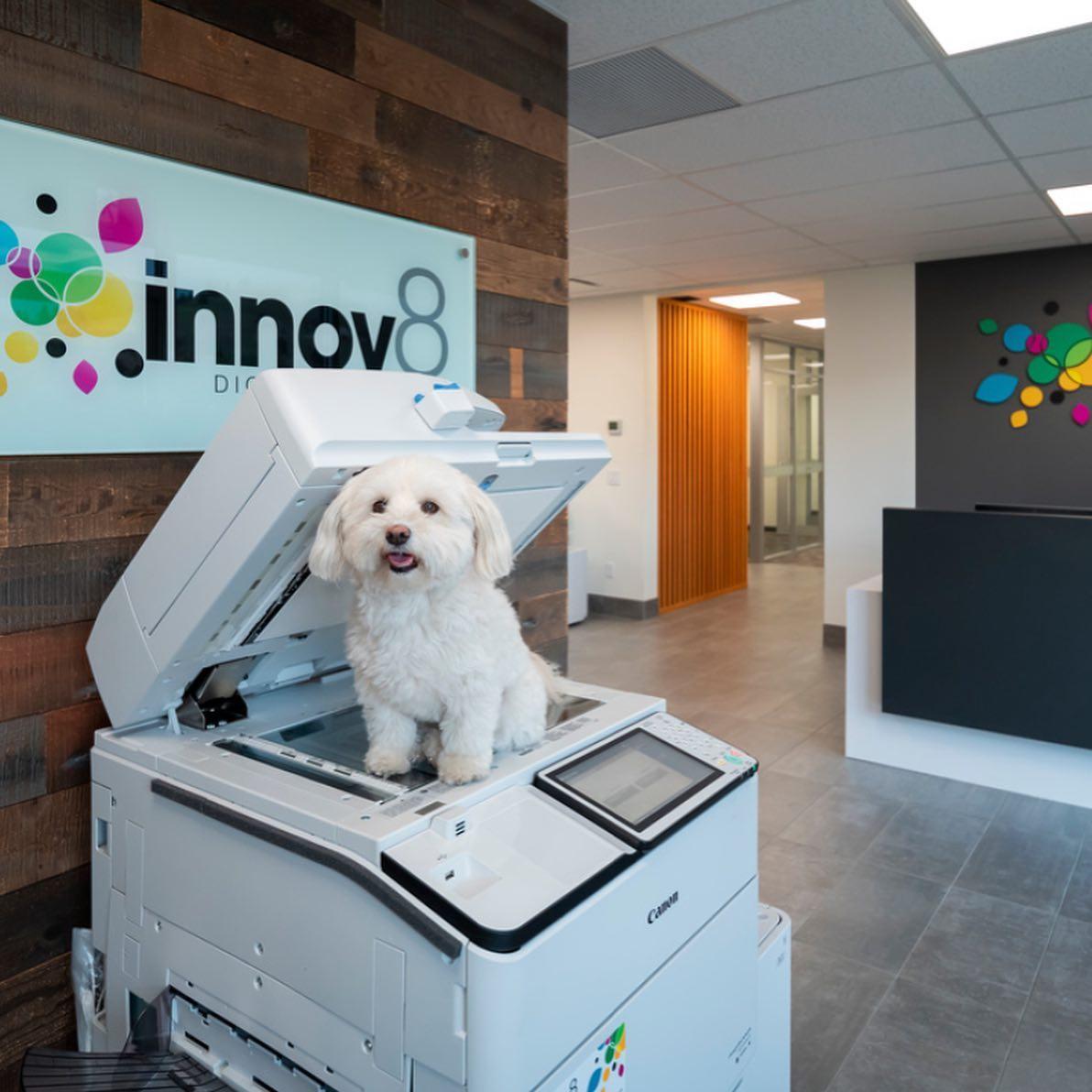 dog-on-canon-printer-at-innov8